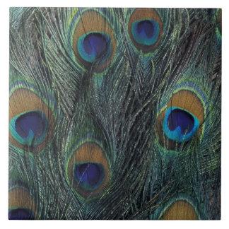 Diseño de la pluma del pavo real azulejo cuadrado grande