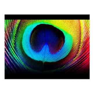 Diseño de la pluma del pavo real tarjeta postal