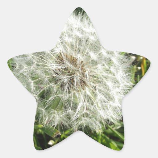 Diseño de la semilla del diente de león pegatina en forma de estrella
