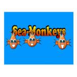 Diseño de Monkees de los monos del mar Tarjeta Postal