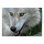 Diseño del Animal-amante del lobo gris de la fauna Tarjeta