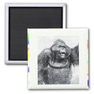 Diseño del bosquejo del dibujo del primate del gor imán cuadrado