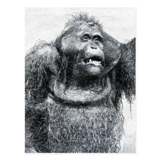 Diseño del bosquejo del dibujo del primate del postal
