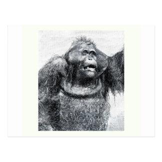 Diseño del bosquejo del dibujo del primate del tarjetas postales