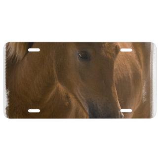 Diseño del caballo de la castaña placa de matrícula