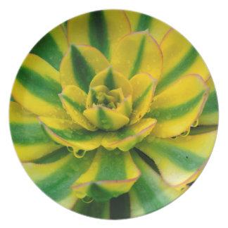 Diseño del cactus platos de comidas