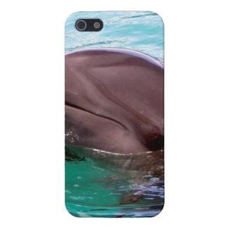 Diseño del delfín iPhone 5 protector