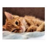 diseño del gatito postal
