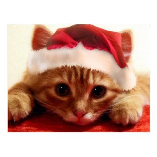 diseño del gatito tarjeta postal