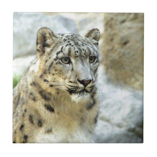 Diseño del gato grande de la onza azulejos ceramicos