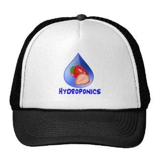 Diseño del hidrocultivo con descenso del azul de l gorra