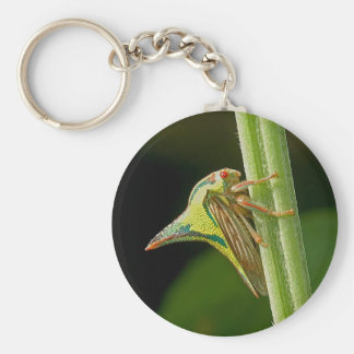 Diseño del insecto de la espina llavero redondo tipo pin