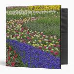 """Diseño del jardín de jacinto de uva, y tulipanes, carpeta 1 1/2"""""""