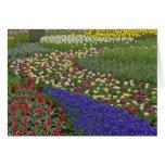 Diseño del jardín de jacinto de uva, y tulipanes, tarjeta de felicitación