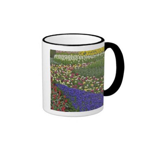 Diseño del jardín de jacinto de uva, y tulipanes, taza de dos colores