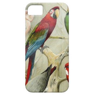 Diseño del loro del Macaw del vintage iPhone 5 Carcasas