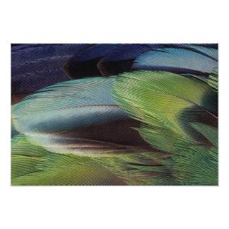 Diseño del modelo de la pluma del loro impresion fotografica