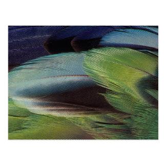 Diseño del modelo de la pluma del loro postal