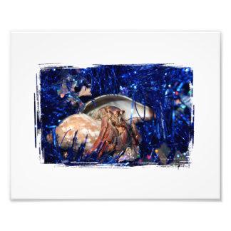 Diseño del navidad del cangrejo de ermitaño contra impresión fotográfica