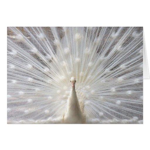 Diseño del pavo real del albino tarjeta de felicitación
