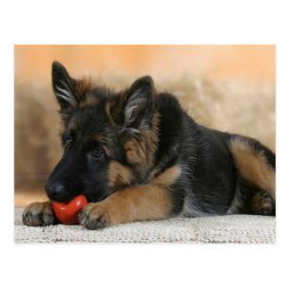 Diseño del perro de pastor alemán postales