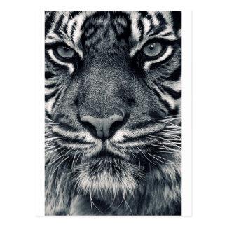 diseño del tigre tarjeta postal