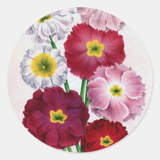 Diseño del vintage de la flor del Primula Pegatina Redonda