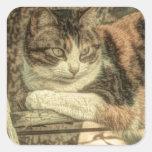 diseño delicioso, precioso del gato de calicó pegatina cuadrada