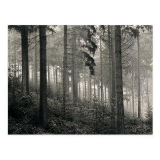 Diseño denso de la foto del bosque tarjetas postales