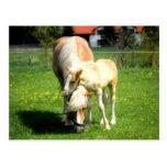 diseño dulce de los caballos postal