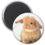 Diseño feliz de Pascua del conejito lindo del bebé Imanes Para Frigoríficos