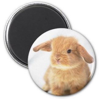 Diseño feliz de Pascua del conejito lindo del bebé Imán Redondo 5 Cm