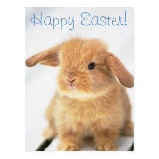 Diseño feliz de Pascua del conejito lindo del bebé Postal