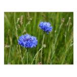 Diseño floral azul hermoso del prado de los postal