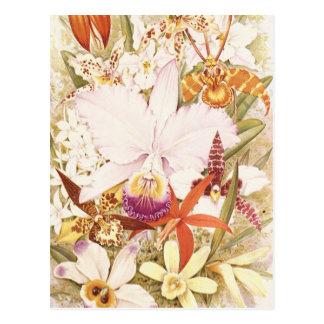 Diseño floral bonito de las floraciones de la flor postales