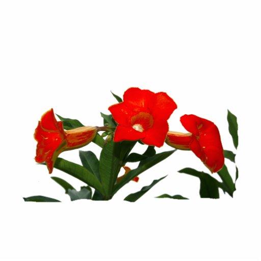 Diseño floral de trompeta de las flores de la foto escultura fotográfica