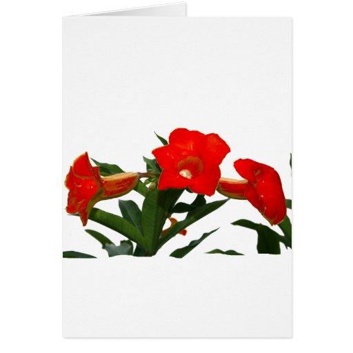Diseño floral de trompeta de las flores de la foto felicitación