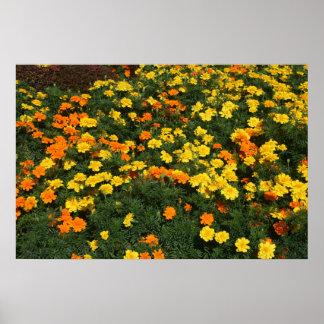diseño floral del campo de flores de la maravilla poster