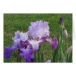 Diseño floral del iris tarjetón