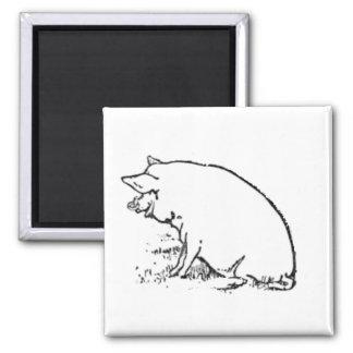Diseño gallardo del bosquejo del cerdo imán cuadrado