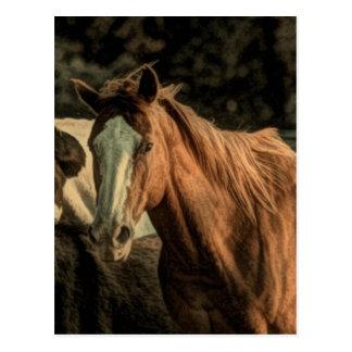 Diseño hermoso del caballo salvaje postal