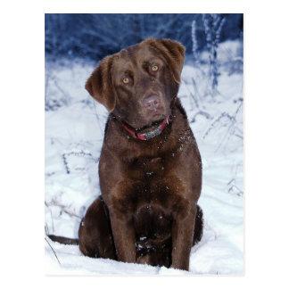 Diseño hermoso del perro de Brown Postales