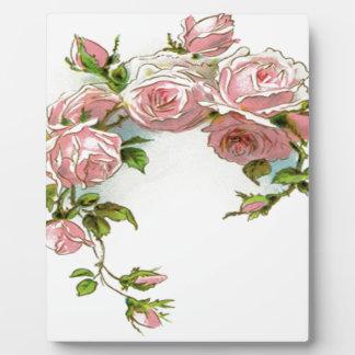 Diseño hermoso del rosa placas