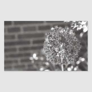 Diseño impotente de la foto de la flor pegatina rectangular