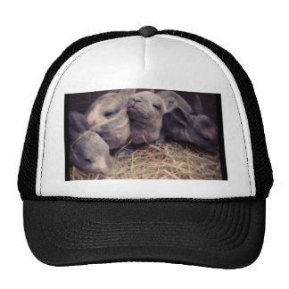 Diseño lindo de la foto del conejo del bebé gorro de camionero