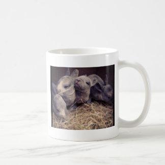 Diseño lindo de la foto del conejo del bebé taza de café