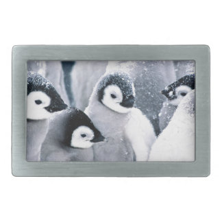 diseño lindo de los pingüinos del pingüino del beb hebillas cinturon rectangulares