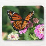 Diseño magnífico de la mariposa de monarca tapetes de ratón