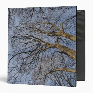 "Diseño/modelo del tronco de árbol. Parque de Pioin Carpeta 1 1/2"""