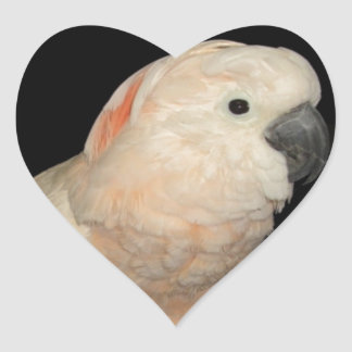 Diseño moluqueño del loro de Cockatoo Pegatina En Forma De Corazón